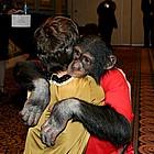natalie portman monkey showest11