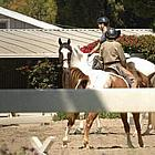 jude law horses34
