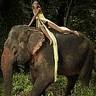 antm elephants04