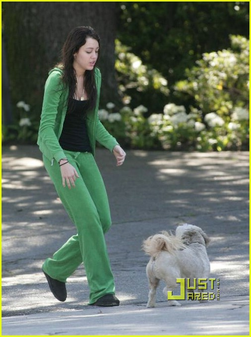 miley cyrus stray dog 15961701