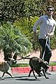 adam brody walking dogs 05