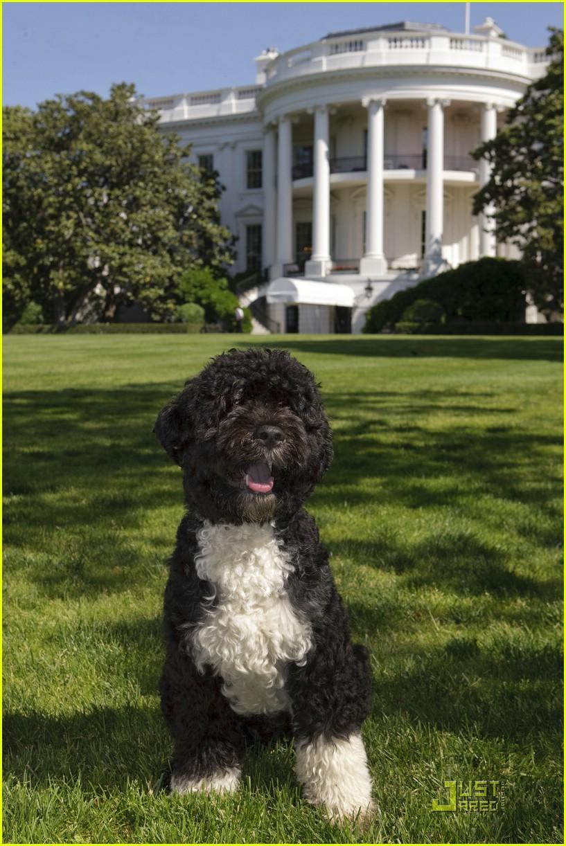 Obama family dog name