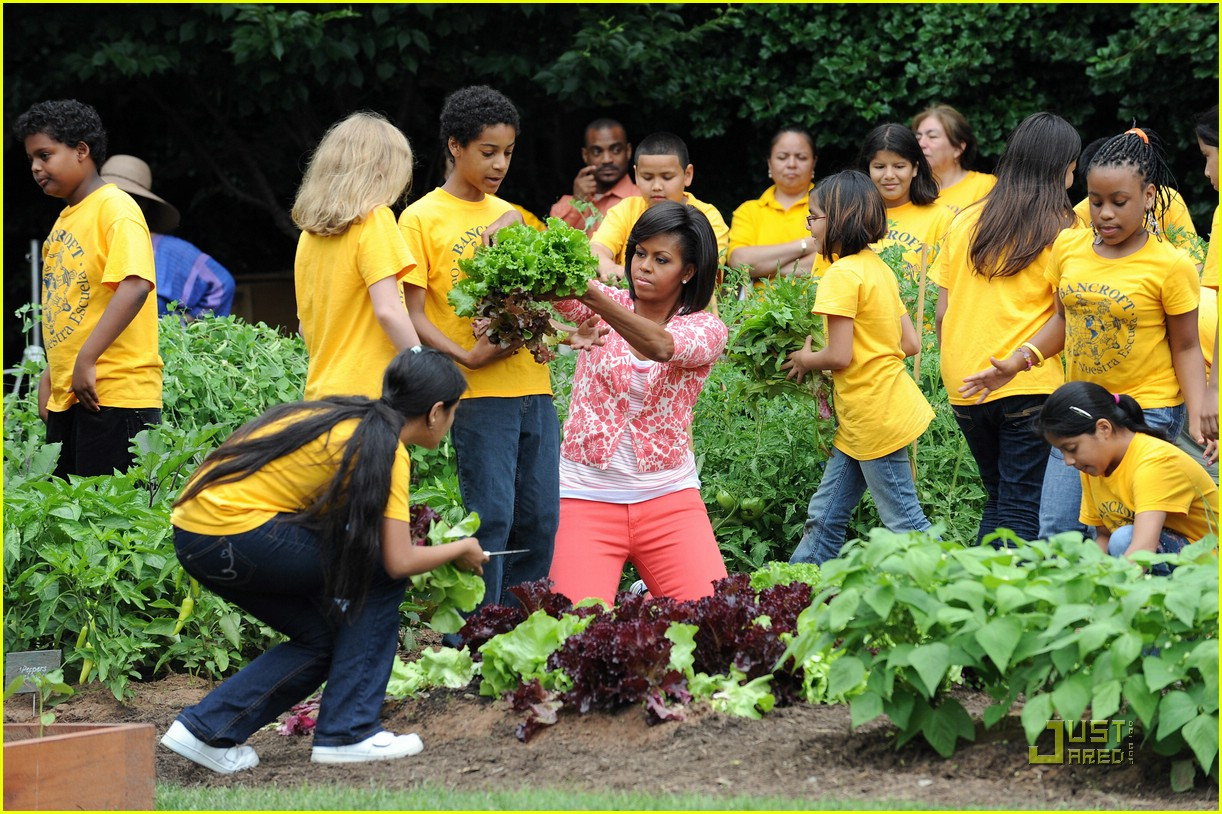 White House Kitchen Garden Michelle Obama Harvests The White House Kitchen Garden Photo