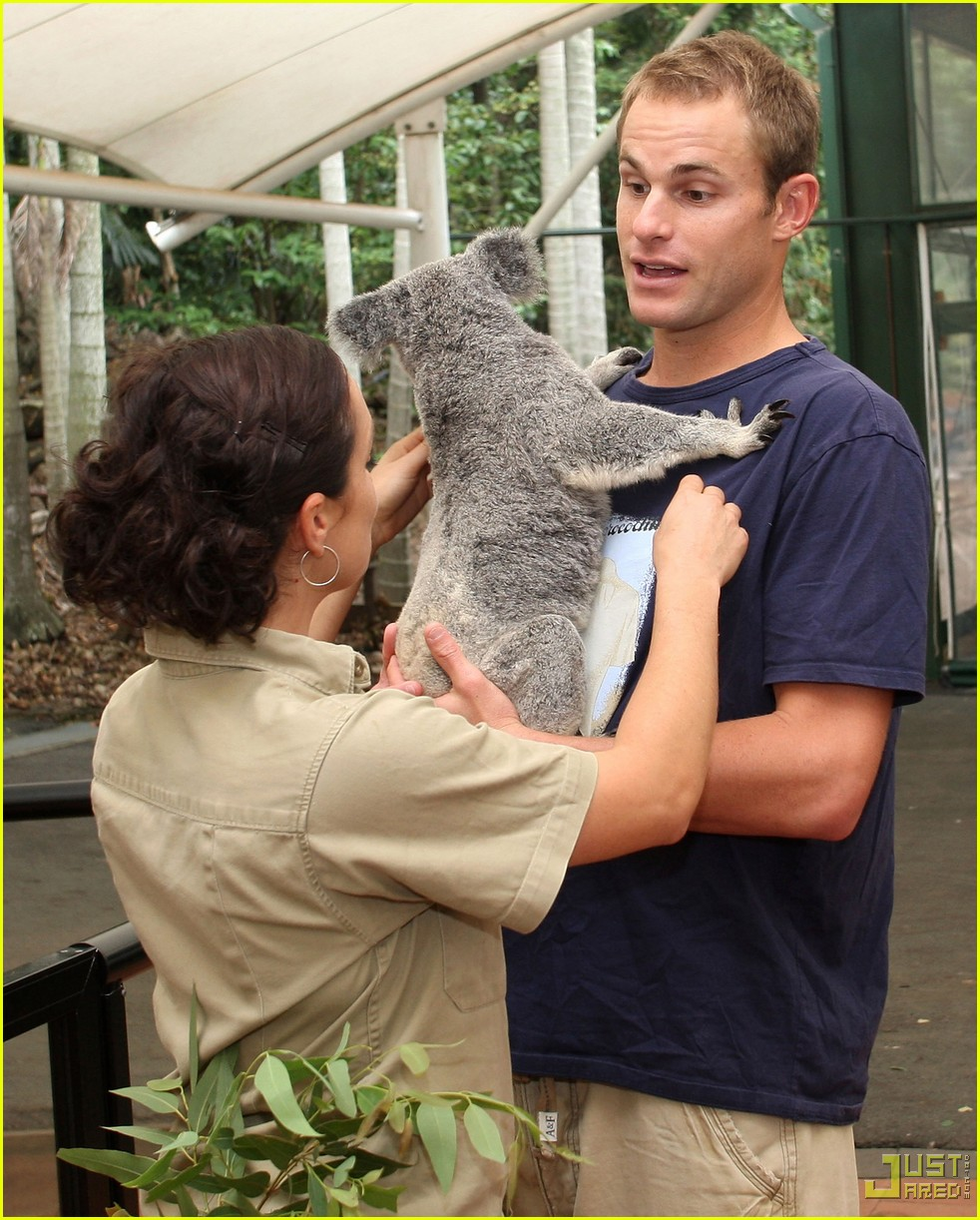 andy roddick brooklyn decker koala couple 13