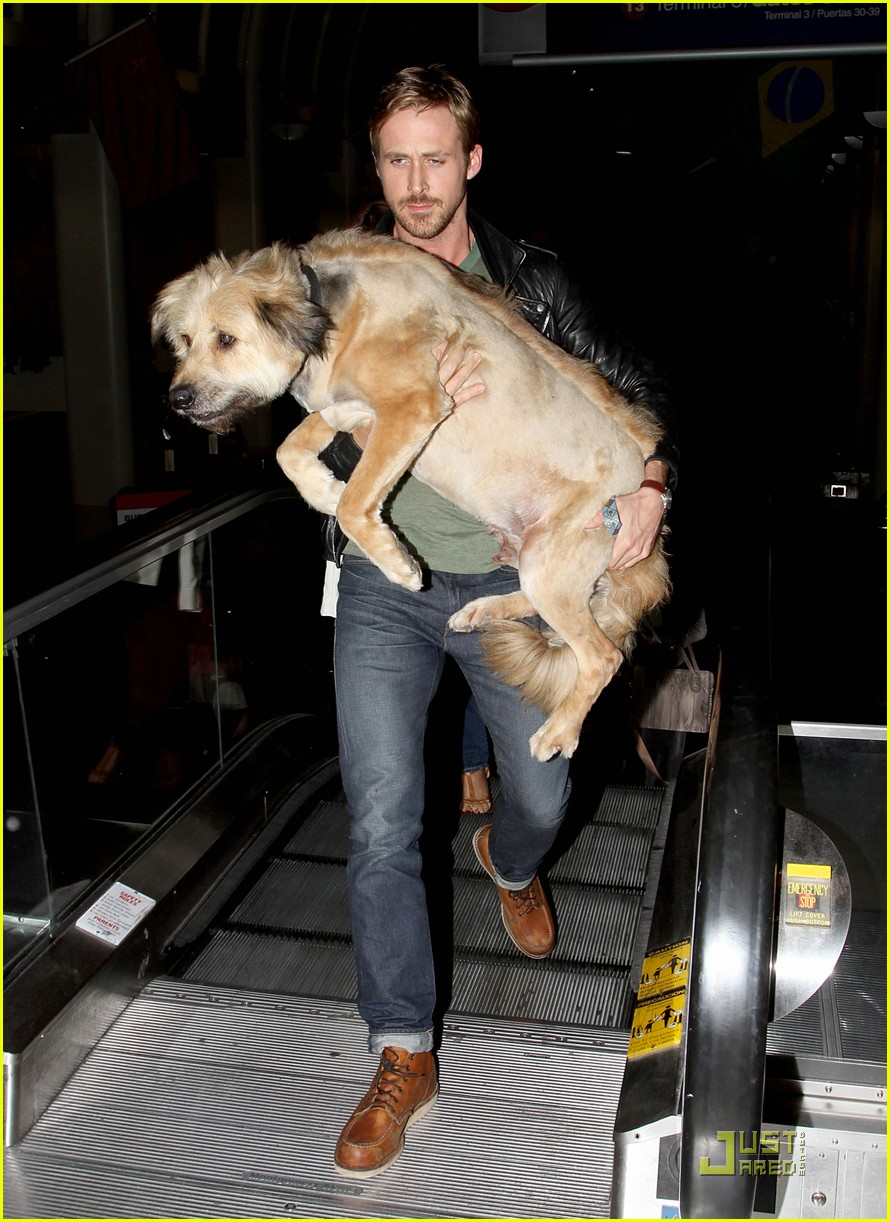 ryan gosling dog lax 01