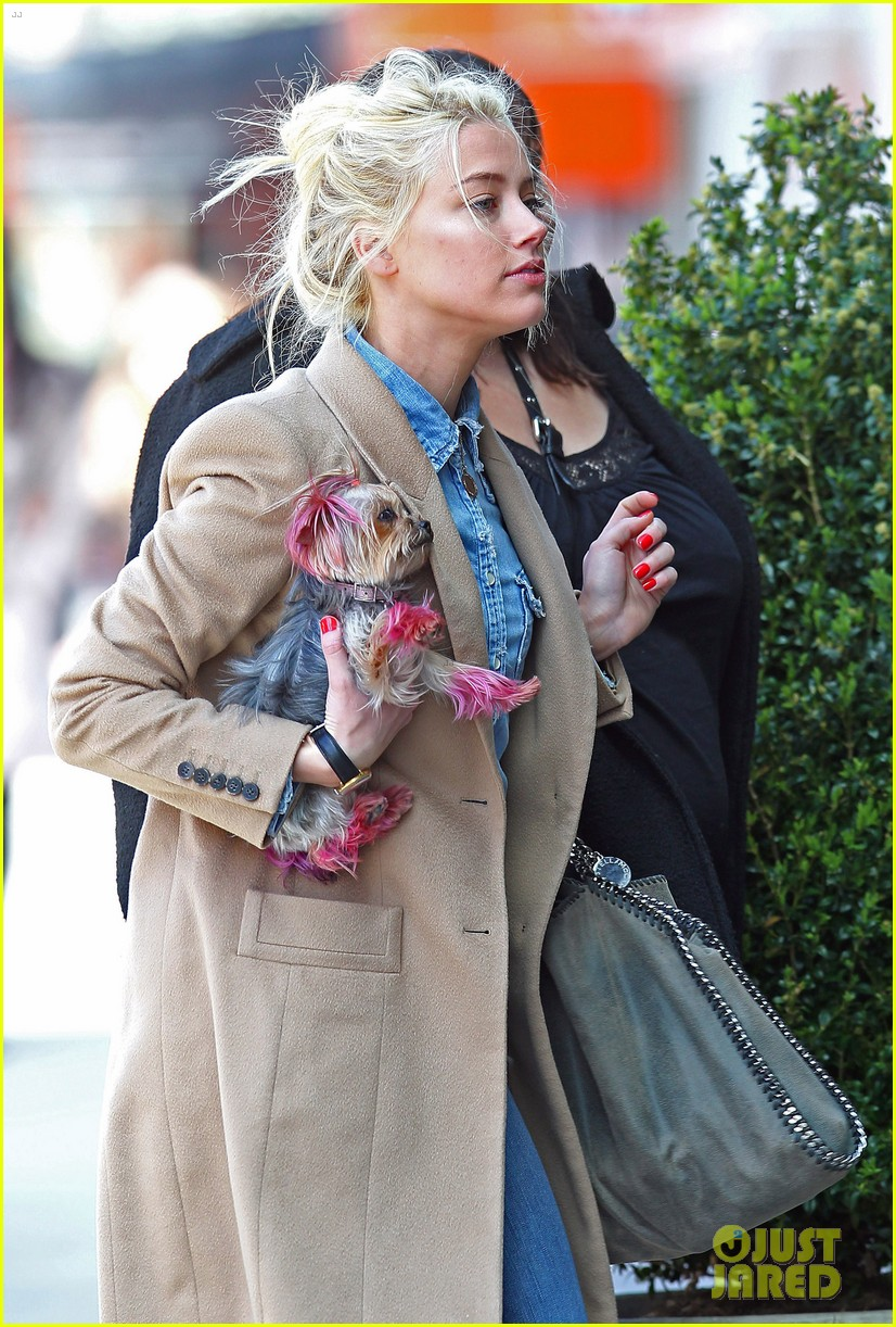 amber heard spy day with pink pooch 05