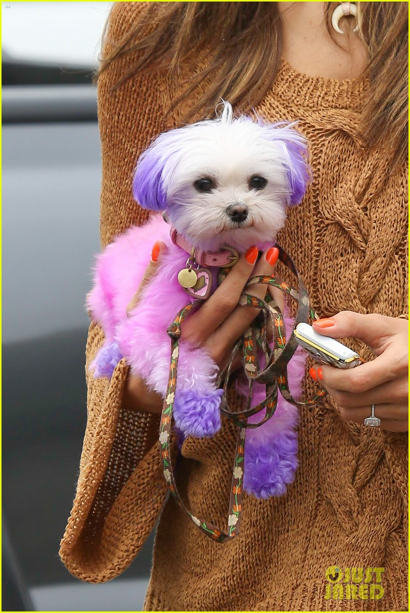 alessandra ambrosio purple pink pooch 02