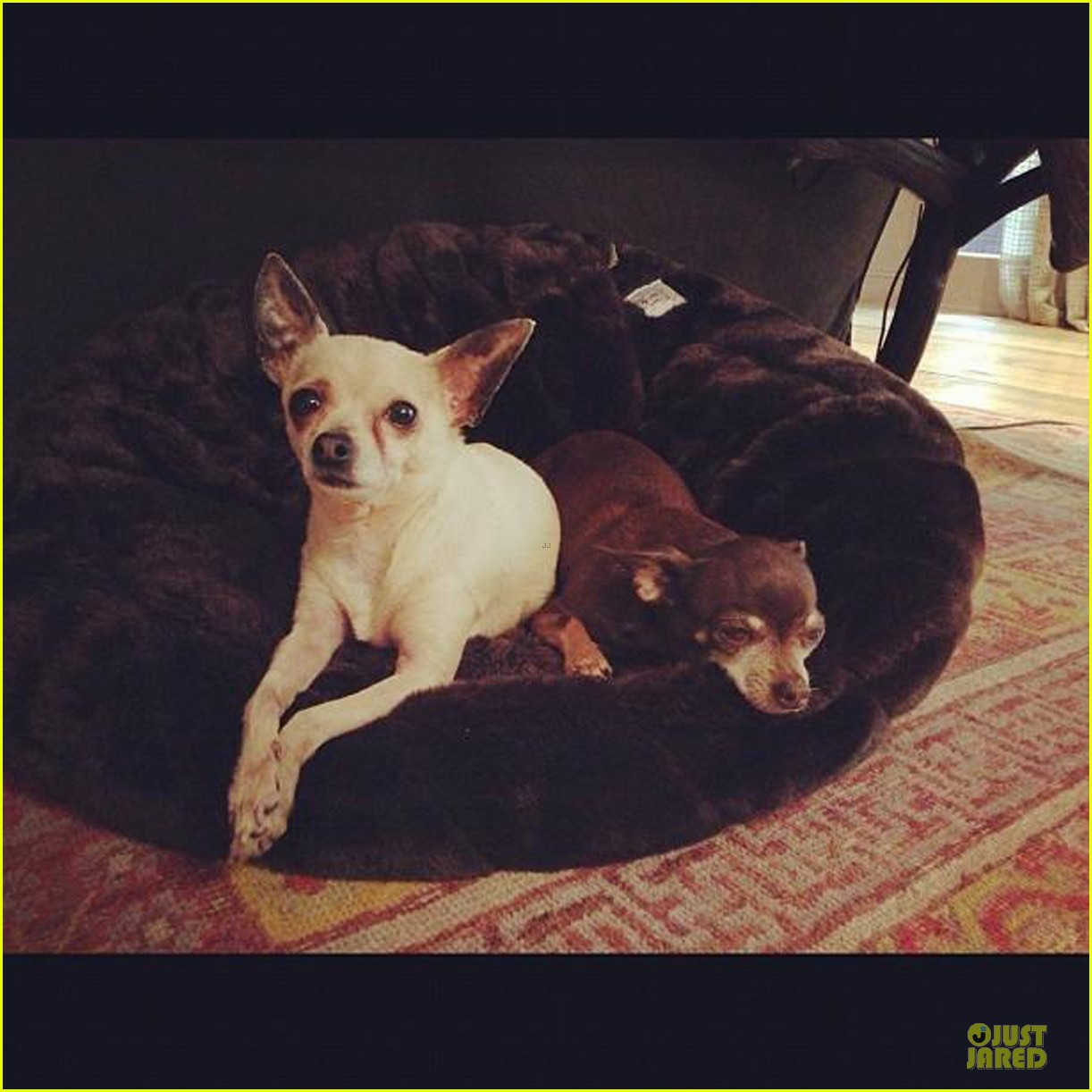 hilary duff shares moments with her little dogs 04