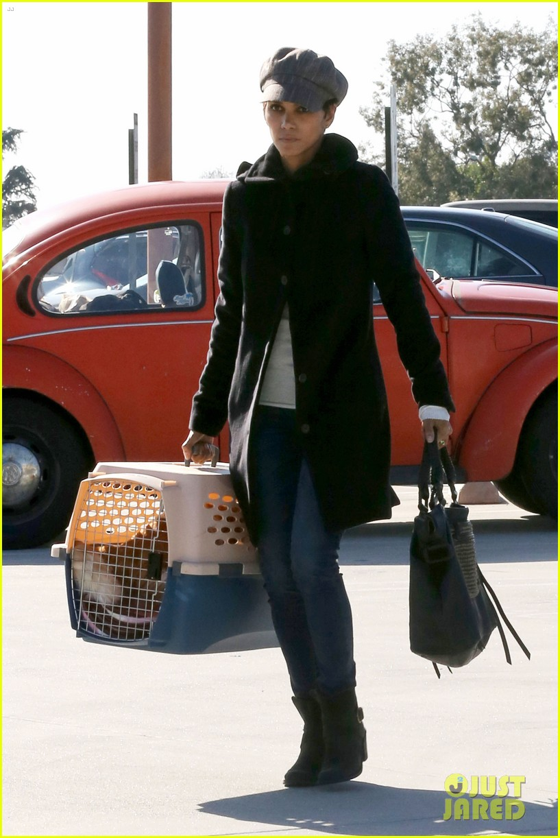 halle berry back at the vet with pet cat 11