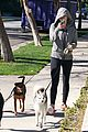miley cyrus hoodie walk with pet pooch 11