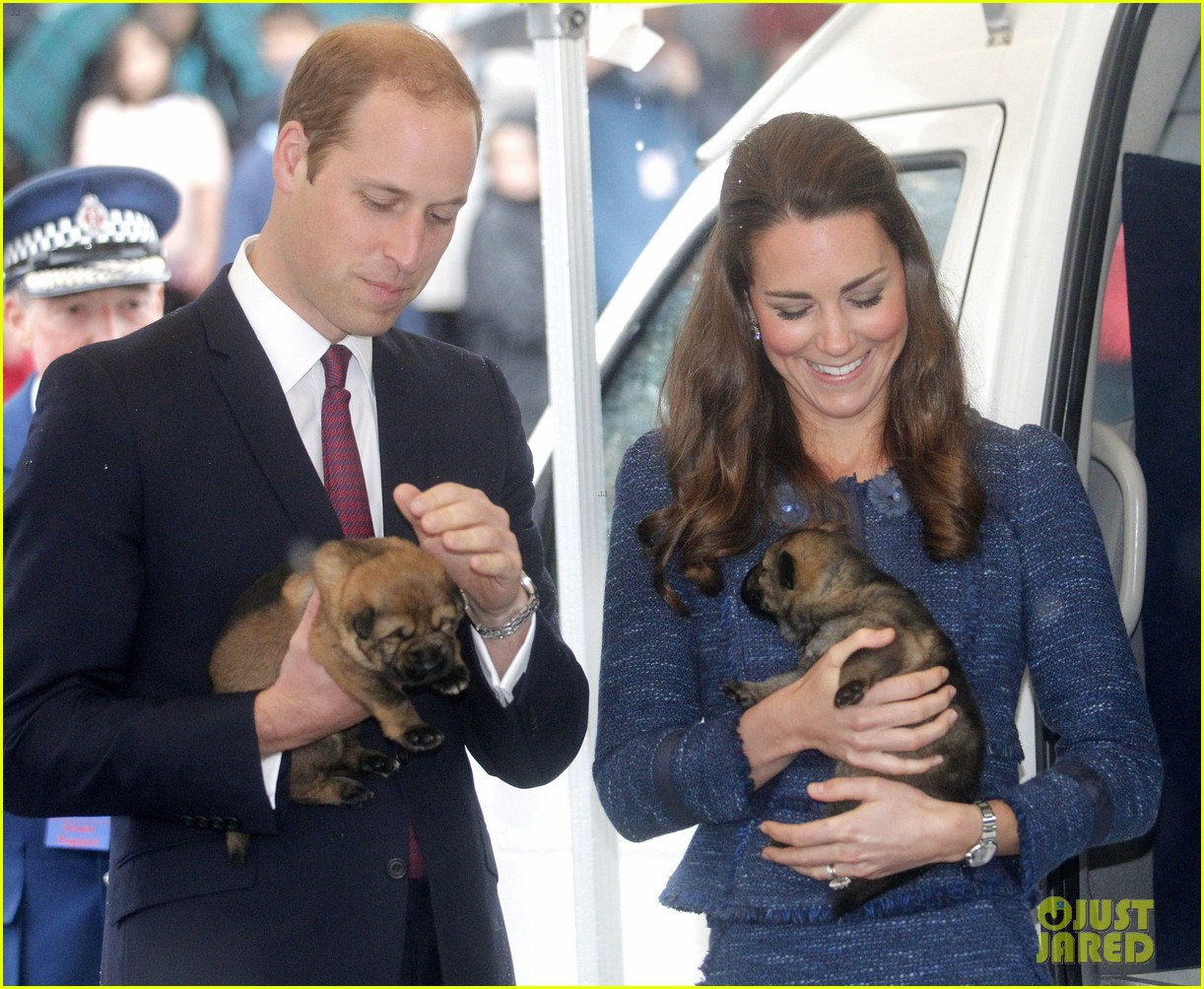 prince george makes appearance parents play with puppies 123092947