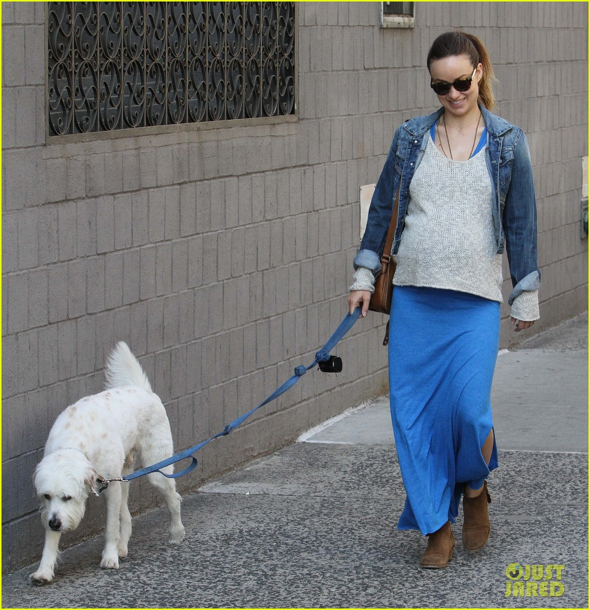 olivia wilde growing baby bump dog walk 223092196