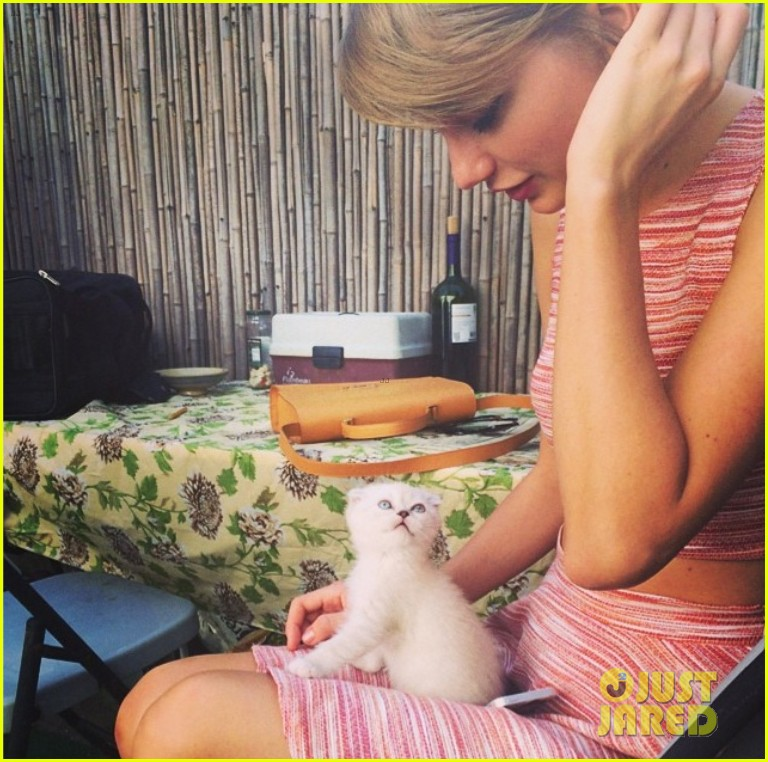 taylor swift new kitten olivia benson 01