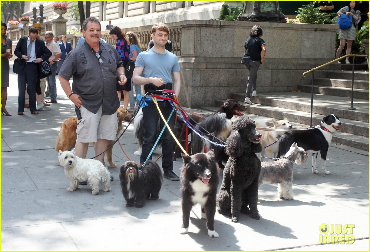 daniel radcliffe dog walker trainwreck nyc set 283147575
