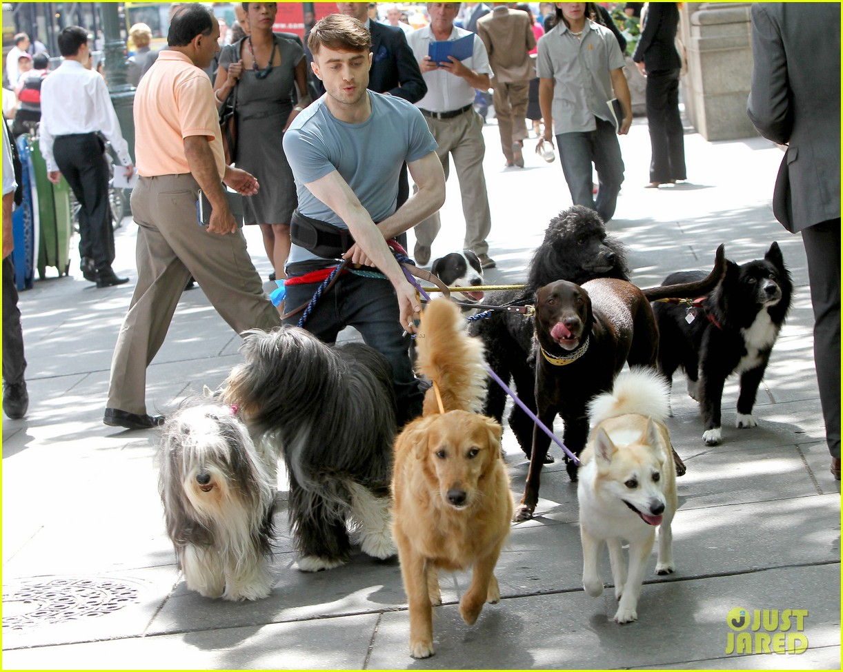 daniel radcliffe dog walker trainwreck nyc set 313147578
