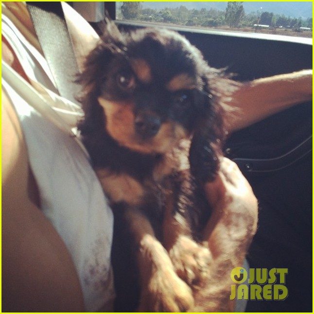 meet naya rivera puppy emmy laser appt 15