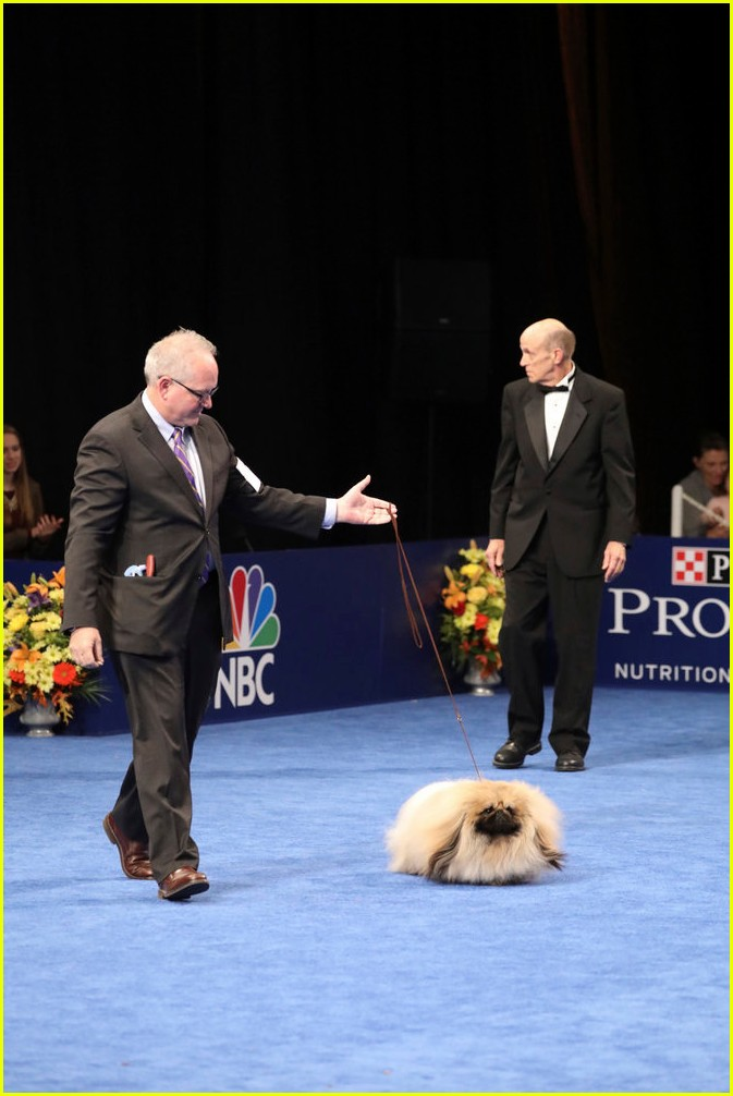 National Dog Show Thanksgiving  Which Channel