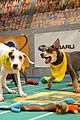 what is the puppy bowl 57