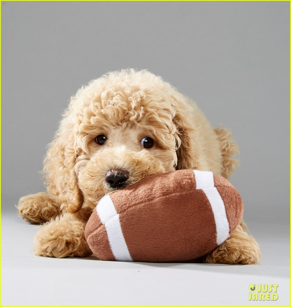 Full Sized Photo of what is the puppy bowl 01 | Photo 3853396 | Just ...