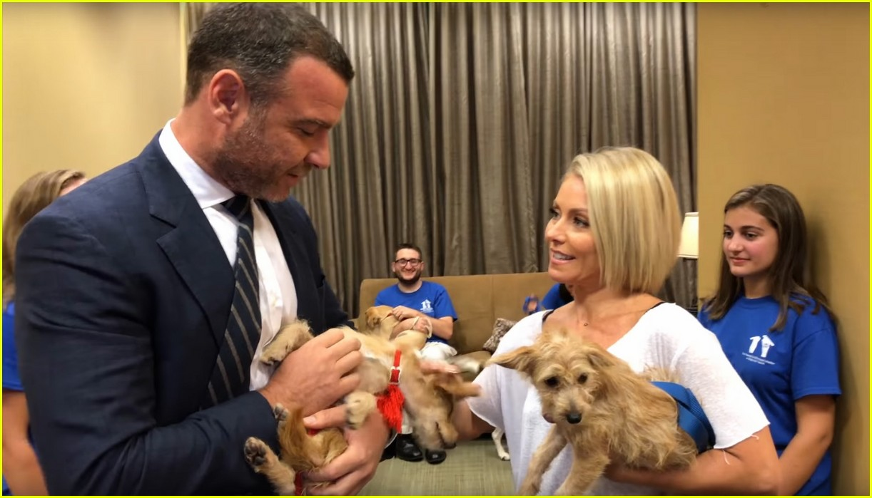 liev schreiber adopts two dogs displaced by hurricane harvey 023951392