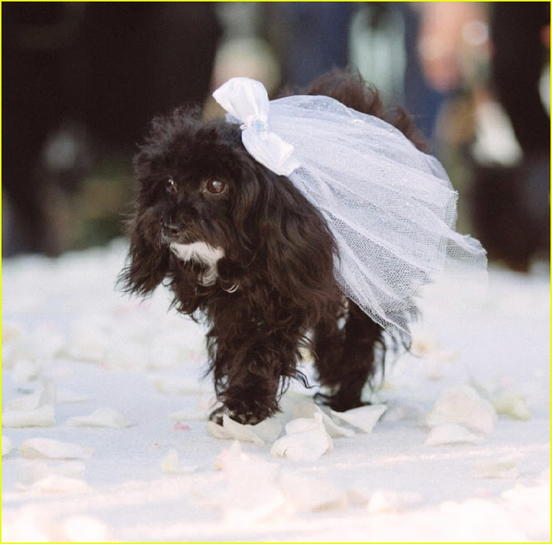 boda amy schumer perro en ceremonia
