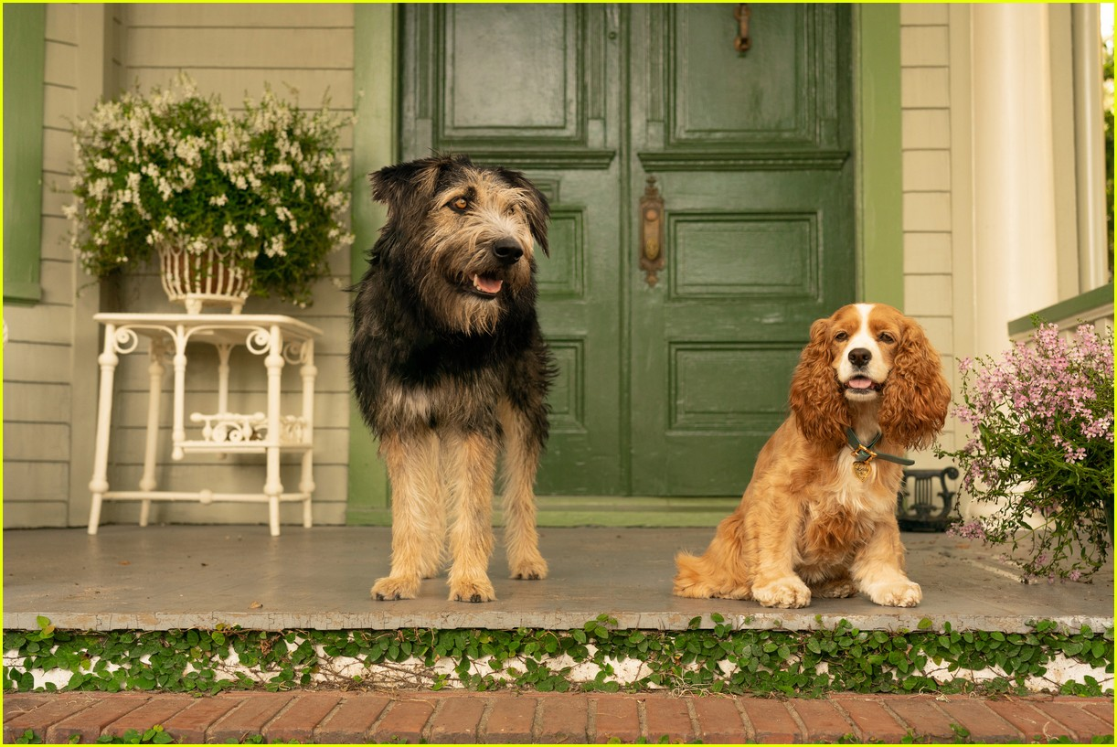 disneys live action lady and tramp gets new trailer 03.