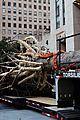 rockefeller christmas tree owl stowaway 01