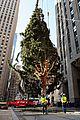 rockefeller christmas tree owl stowaway 06