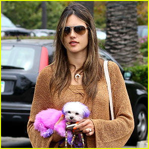 Alessandra Ambrosio: Pink &#038; Purple Pooch!