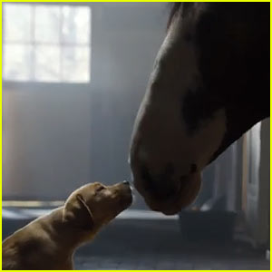 Budweiser Super Bowl Commercial 2014 (Video) - Clydesdales Horses & Puppy Love!
