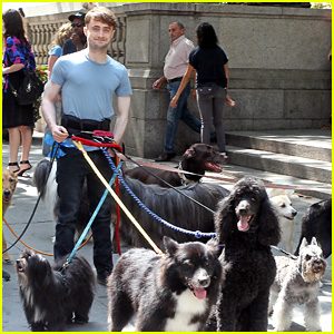 Daniel Radcliffe Handles Multiple Dogs on NYC 'Trainwreck' Set!