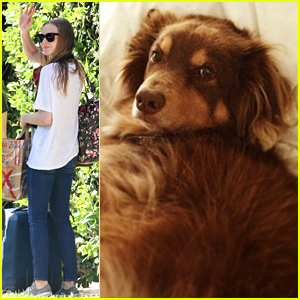 Amanda Seyfried's Dog Finn Is Too Cute, Even When He's A Little Guilty!
