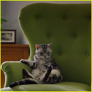 Friskies Super Bowl 2015 Commercial: Kittens Make Fun of Lazy Humans - Watch Now!