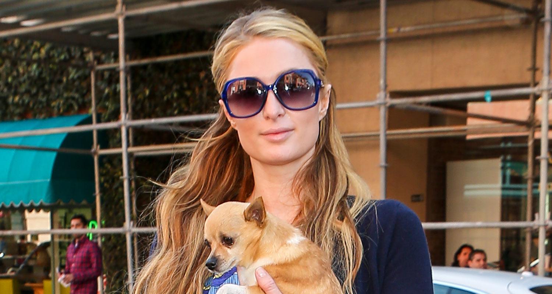 Paris Hilton   s...I Am Legend Dog Dies