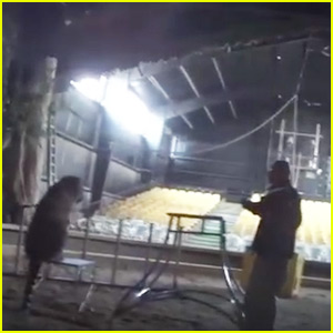 Hollywood Animal Trainer Recorded Brutally Whipping Tiger