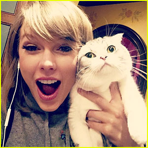 Taylor Swift's Cat Meredith Watches Fans from NYC Window
