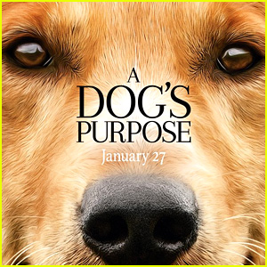 'A Dog's Purpose' Producer Says Dog Was Not in Danger After Watching Unedited Video