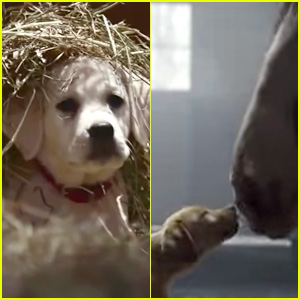Watch budweisers beloved puppy commercials right here super bowl watch budweisers beloved puppy commercials right here mozeypictures Choice Image