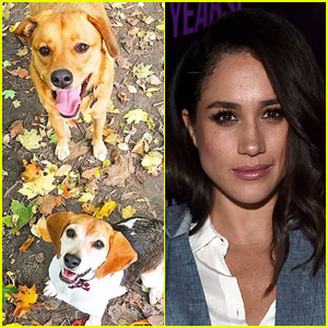 Meghan Markle Forced to Leave One of Her Dogs in North America