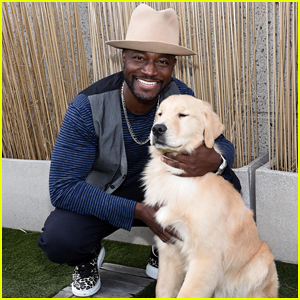 Taye Diggs Teams Up with Royal Canin To Help Dog Lovers 'Chews' Their Best Breed Match!