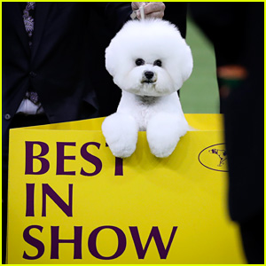 Who Won Best in Show at Westminster Dog Show 2018?