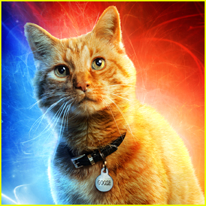 Goose, the Cat in 'Captain Marvel,' Is Actually a...