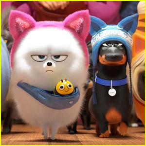 Kinofilm Pets