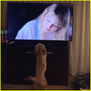 Kristin Chenoweth's Dog Is Obsessed With Taylor Swift's Cat! (Video)