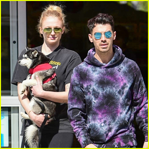 Sophie Turner Covers Up Baby Bump While Holding Dog Porky During Day Out with Joe Jonas