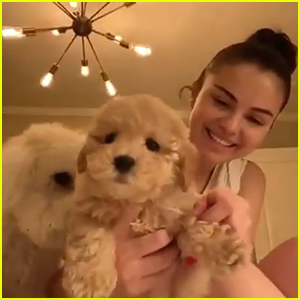 Selena Gomez Fosters & Then Adopts Brand New Puppy During Quarantine