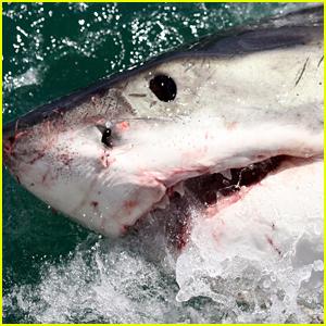 A Mini Shark Week Is Coming This Weekend!