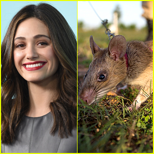 Emmy Rossum's Dogs Murder Rat, She Buries Rat in Gucci Shoe Box