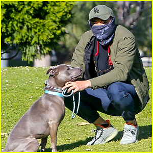 Henry Golding Takes His Foster Dog for a Walk After Incident at Dog Park