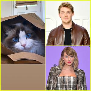 Joe Alwyn Shares Cute Pics of Girlfriend Taylor Swift's Cat Benjamin Button During Quarantine